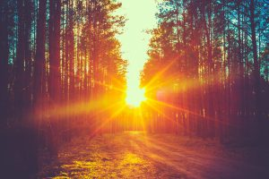 Forest-Road-sunrise